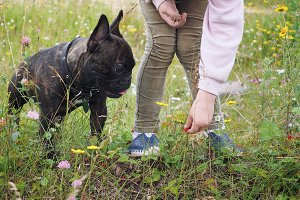Child and dog collect wild strawberr