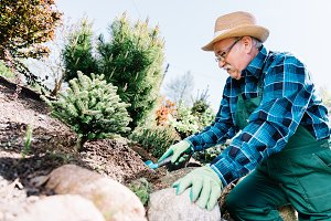Senior man planting plants in a gard