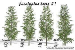 Eucalyptus tree #1