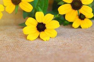 Yellow flowers on a light burlap