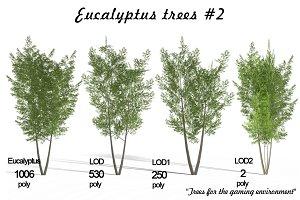Eucalyptus tree #2