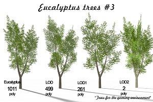 Eucalyptus tree 3