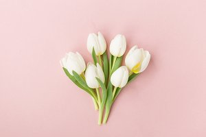 White tulips on pink table