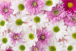 White and pink soft flowers