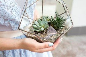 Florarium with cactuses