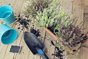 Flat lay garden concept