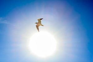 White seagull in the sun on a sky