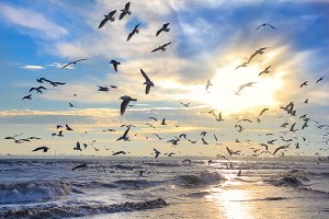 Sunset, sea, birds