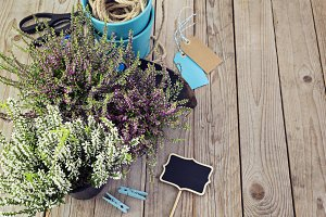 Fresh heather and garden tools