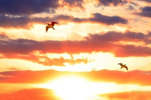 Sunset in the sky and birds