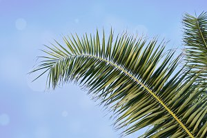 Palm leaf against blue sky