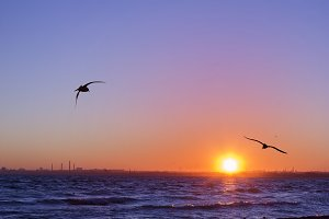 Sunset on sea, silhouettes of birds