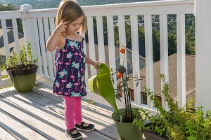Small toddler girl on wooden deck watering tomatoes