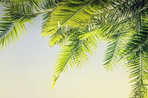 Sunlight Palm leaves background