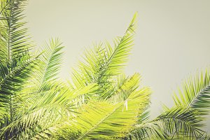 Toned sunlight Palm leaves