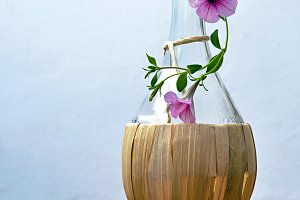 Chianti bottle with petunias