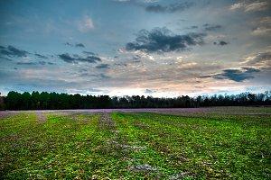 Overcast Spring Field