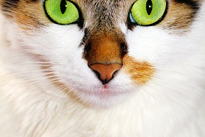 Portrait cat with green eyes