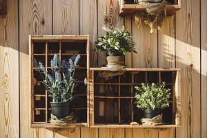 Wooden boxes with aromatic plants
