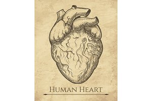 Human heart retro sketch