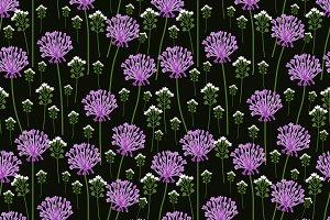Allium flowers