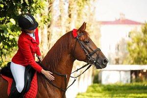 Jockey in saddle on horseback