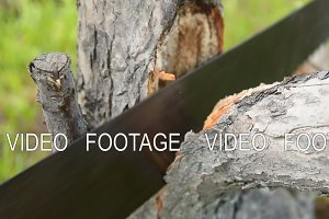 Man cutting the tree branch with hand saw