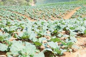 Agricultural land planted
