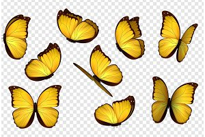 Butterfly vector illustration.
