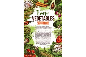 Vector sketch poster of natural farm vegetables