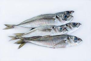 Fresh fish on a white background.
