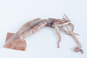 Squid on white background.