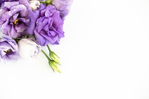 Violet Purple Floral Stock Photo