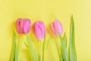 Three pink tulips on yellow