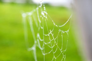 Spiderweb with drops