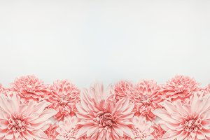 Pastel pink flowers banner or border