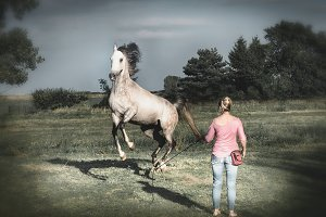 Horse free dressage