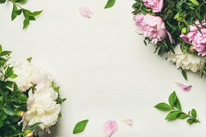 Flat-lay of peony flowers over white