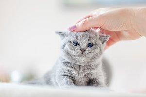 Cute kitten loves being stroked by w
