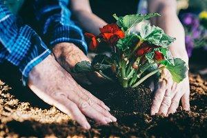 Gardeners planting red flower