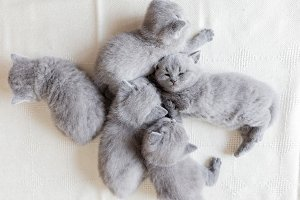 Couple of fluffy kittens sleeping. B