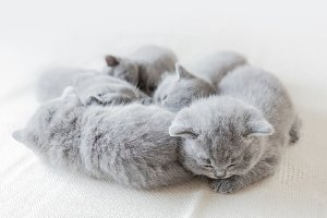 Sleeping little cats in a group.