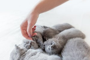 Woman's hand petting cats