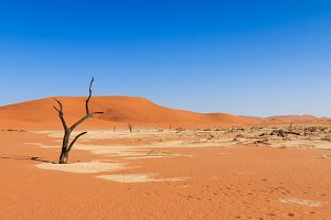Lonely tree deadvlei valley Namibia