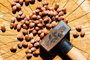 Nuts to be cracked with hammer