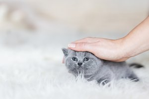 Woman's hand stroking young kitten