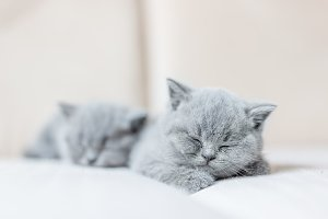 Cute tiny cat sleeping sweetly on hi
