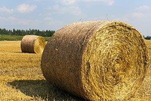 Round haystacks