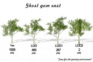 Ghost gum east