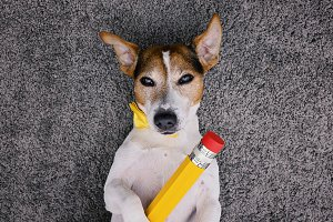 Cute dog with yellow pencil